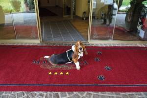 Außergewoehnlich Uebernachten mit Tourismusmagazin PUR: Hundehotel Felderer